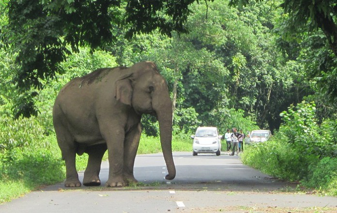 Of fireflies, tuskers & leeches in Tamil Nadu's Elephant Valley
