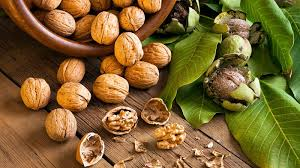 Consuming walnuts may be beneficial for sperm health